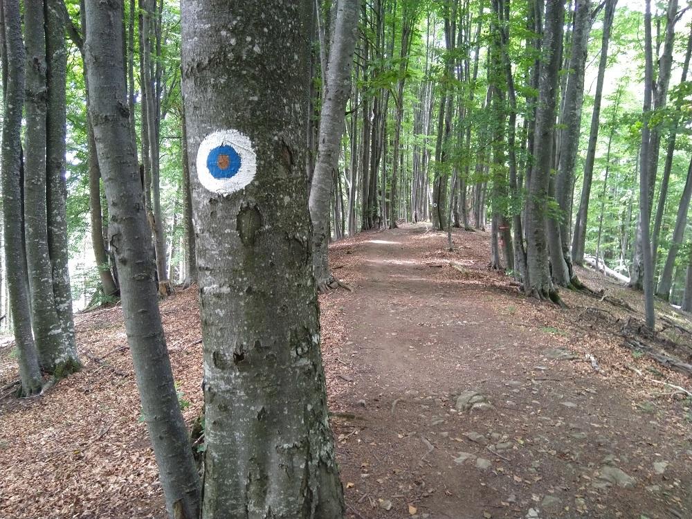 Sestupové cesta lesem