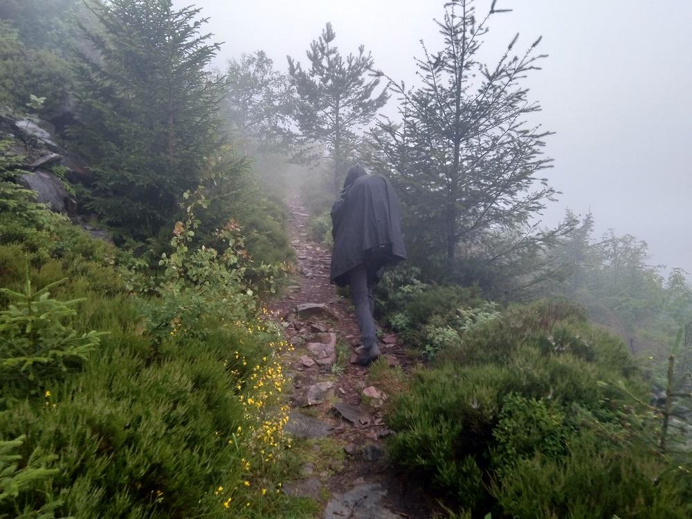 Schwarzwald v dešti