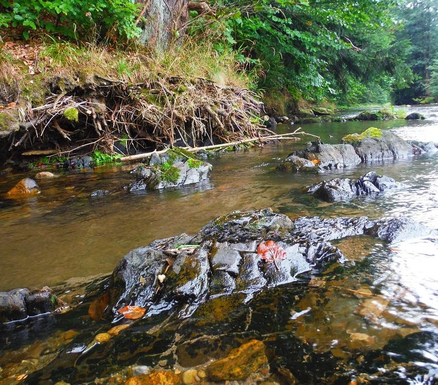 Vystupující bedrock z řeky