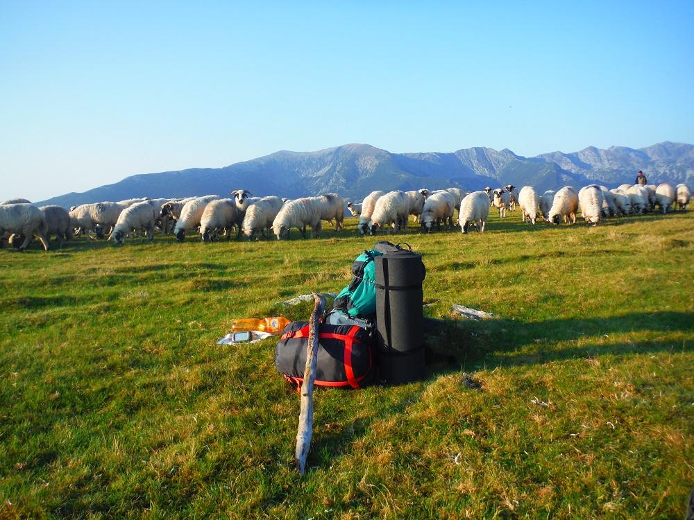 Pauza u stáda ovcí