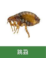 滅蟲 -04