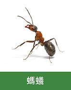 滅蟲 -05