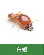 滅蟲 -01
