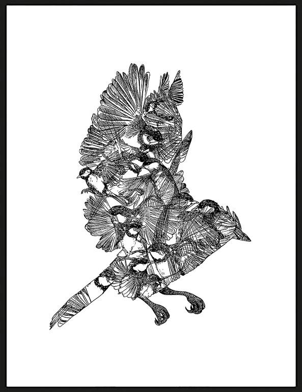 BIG BIRDY