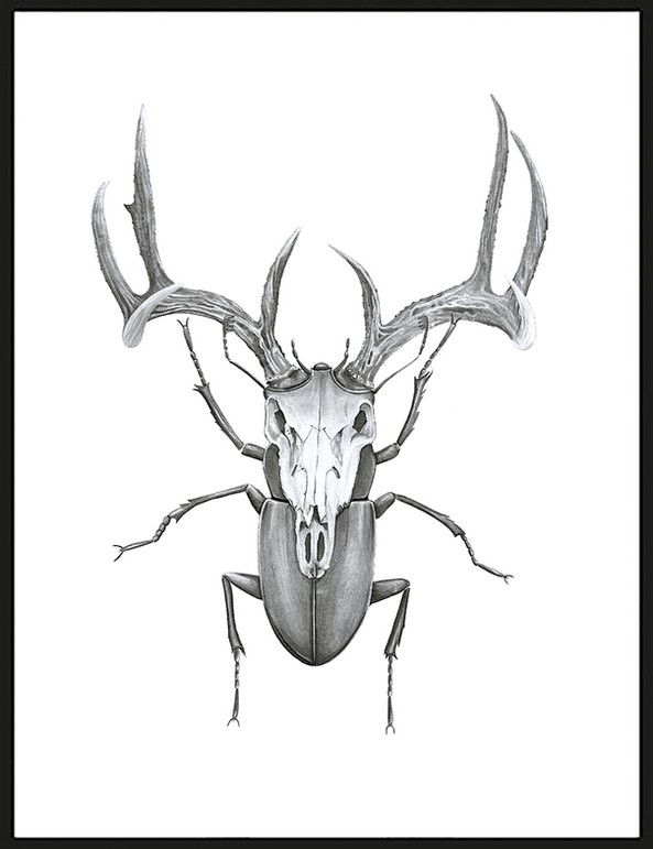 MR STAG BEETLE