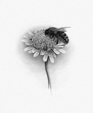 NORDIC BEE