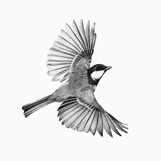 FLYING GREAT TIT
