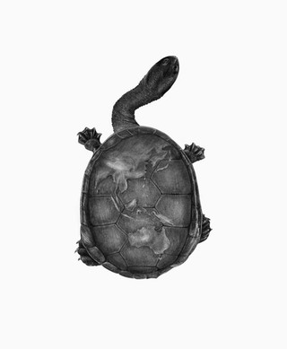 SNAKE NECKED TURTLE WITH MAP