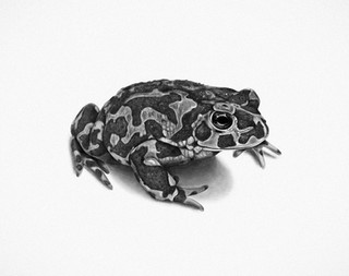 GREEN SPOTTED TOAD