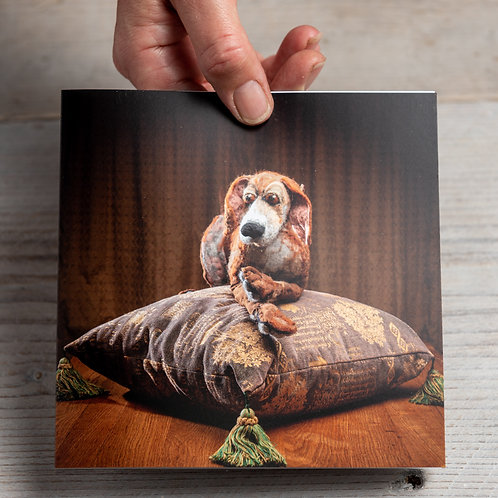 Greeting Card - Conker on a cushion