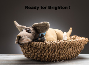 Hawkes Hounds go to Brighton
