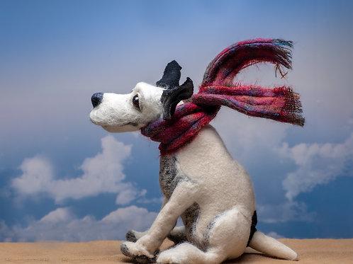 Windswept Doris the Terrier
