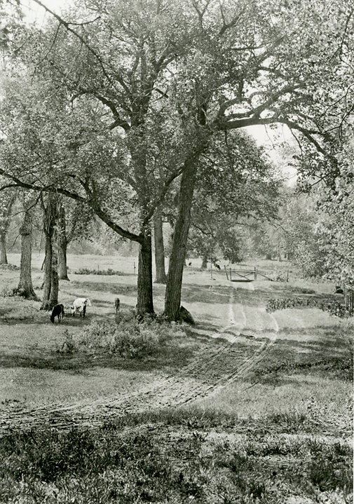 Fraser's Grove 1920.jpg