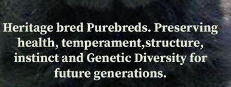 good for breeders.JPG