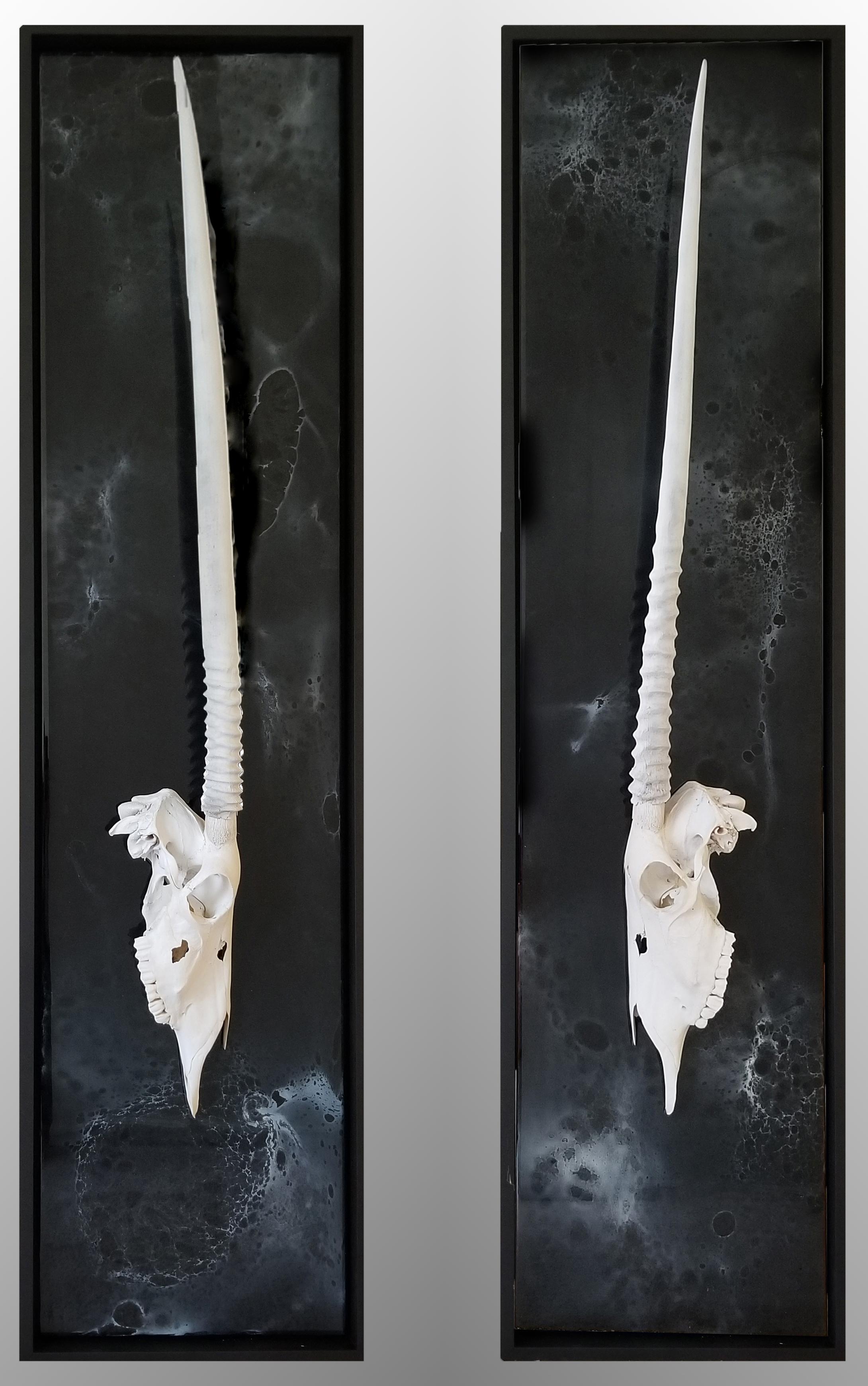 Mirrored Gemsbok