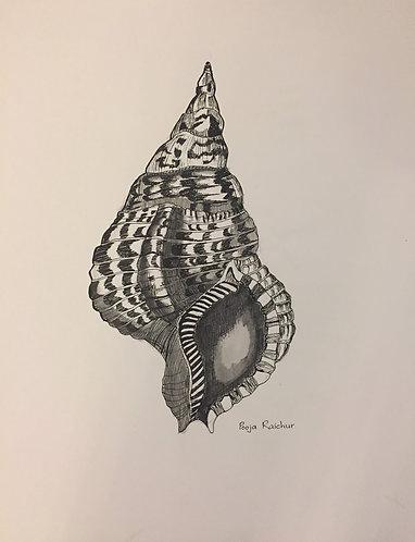 A Triton shell