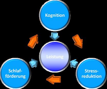 Kreislauf Kognition.png