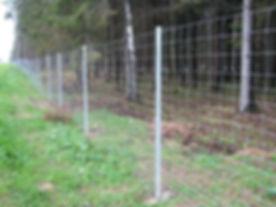 Miško tinklo tvora