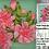 Thumbnail: Pink Peonies