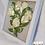 Thumbnail: 5 White Roses