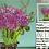 Thumbnail: Purple Chrysanthemum