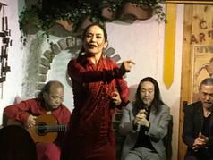 el Flamenco Japones  本物は誰だ!②