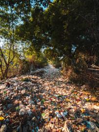 Plastico en bosque