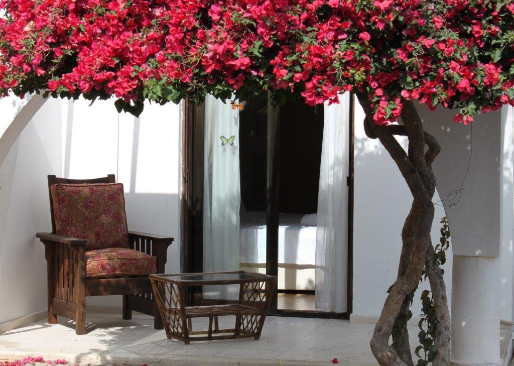 terrace3.jpg