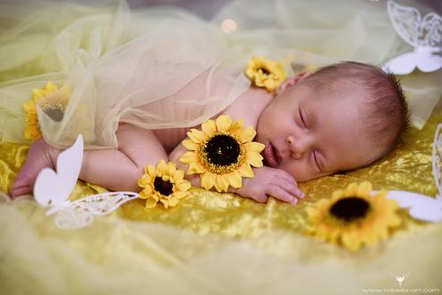Sonnenblumenbaby