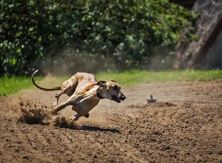 Elige a tu perro según su nivel de ejercicio, aseo y entrenamiento