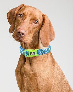 perro, accesorios, mascota, mascan, collar