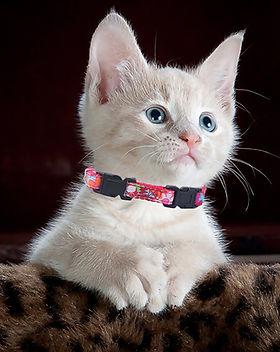 Collar Doble Seguridad.jpg