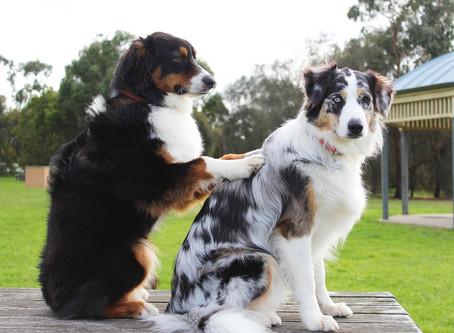Revisa a tu perro periódicamente
