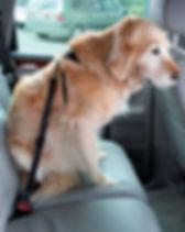 perro, accesorios, mascota, mascan, arnes, paseo