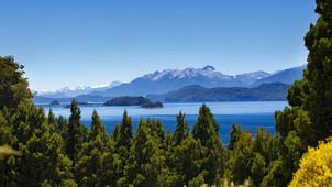 Bariloche, más verde: plantarán un árbol autóctono por cada bebé que nazca en la ciudad