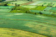 fields (4).jpg