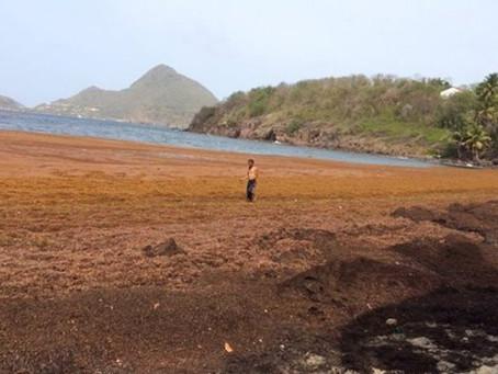 Sargasses, Brume de Sable, Erosion, Ouragans, les Antilles-Françaises paradis à préserver.