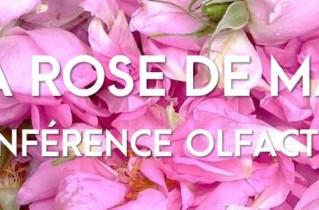 L'OSMOTHEQUE conférence olfactive : la Rose de Mai ou Centifolia