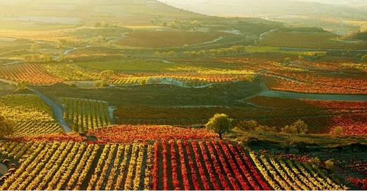 Wine_tour_Spain_Rioja_Gourmet_wine_tour.