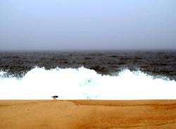A wave and a peep. Westhampton Beach