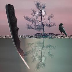 Jug tree. Photomontage, encaustic.