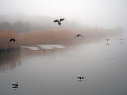 Fog, inlet in Westhampton NY