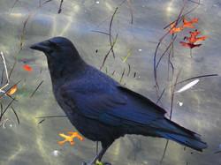 Underwater raven. Photomontage.