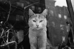 NYC70 shop cat