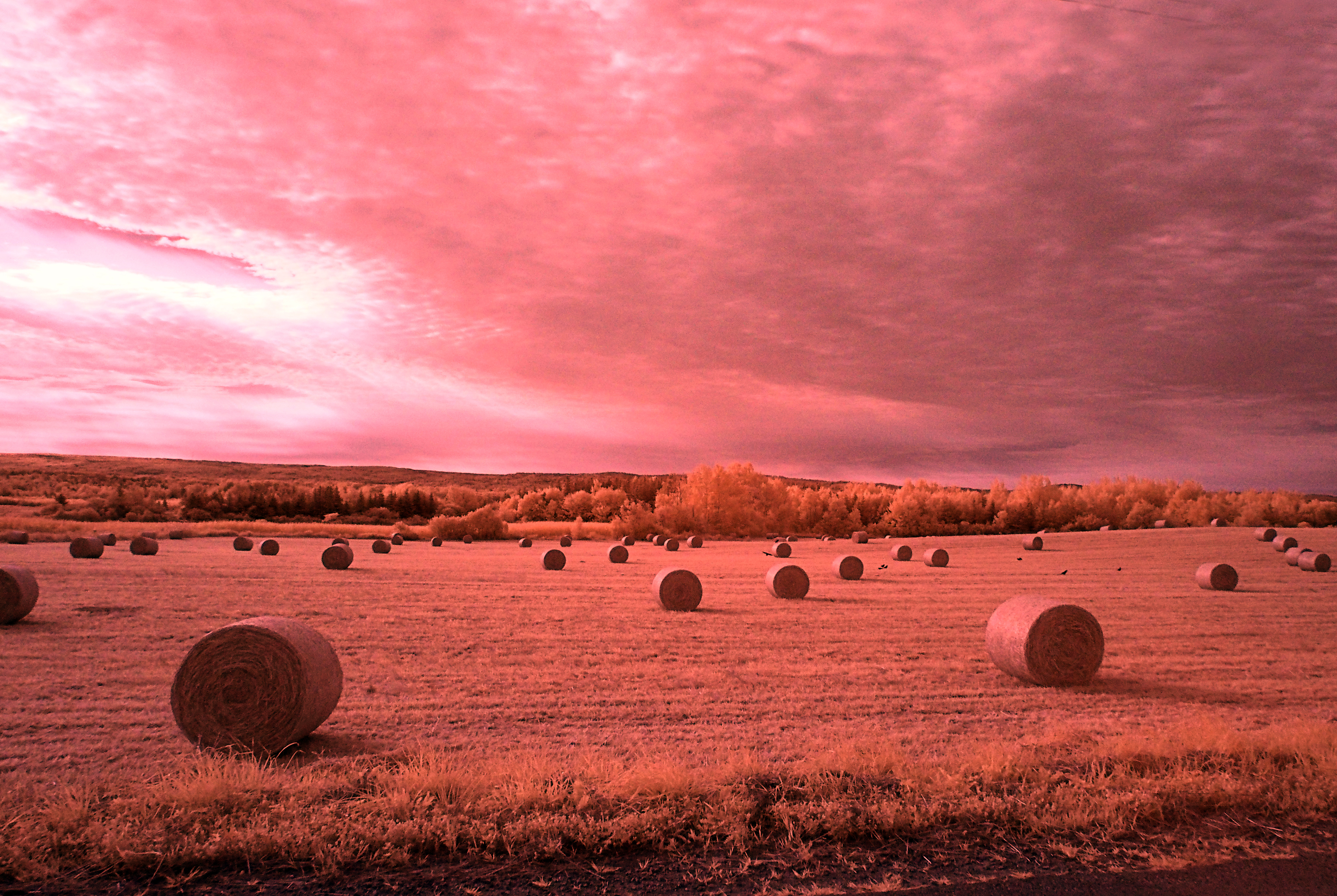 Round bales, Clarence Road NS