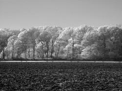 Plowed field, North Fork.