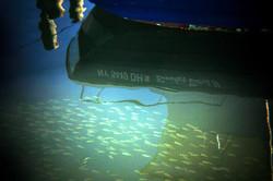 Greenport fish.