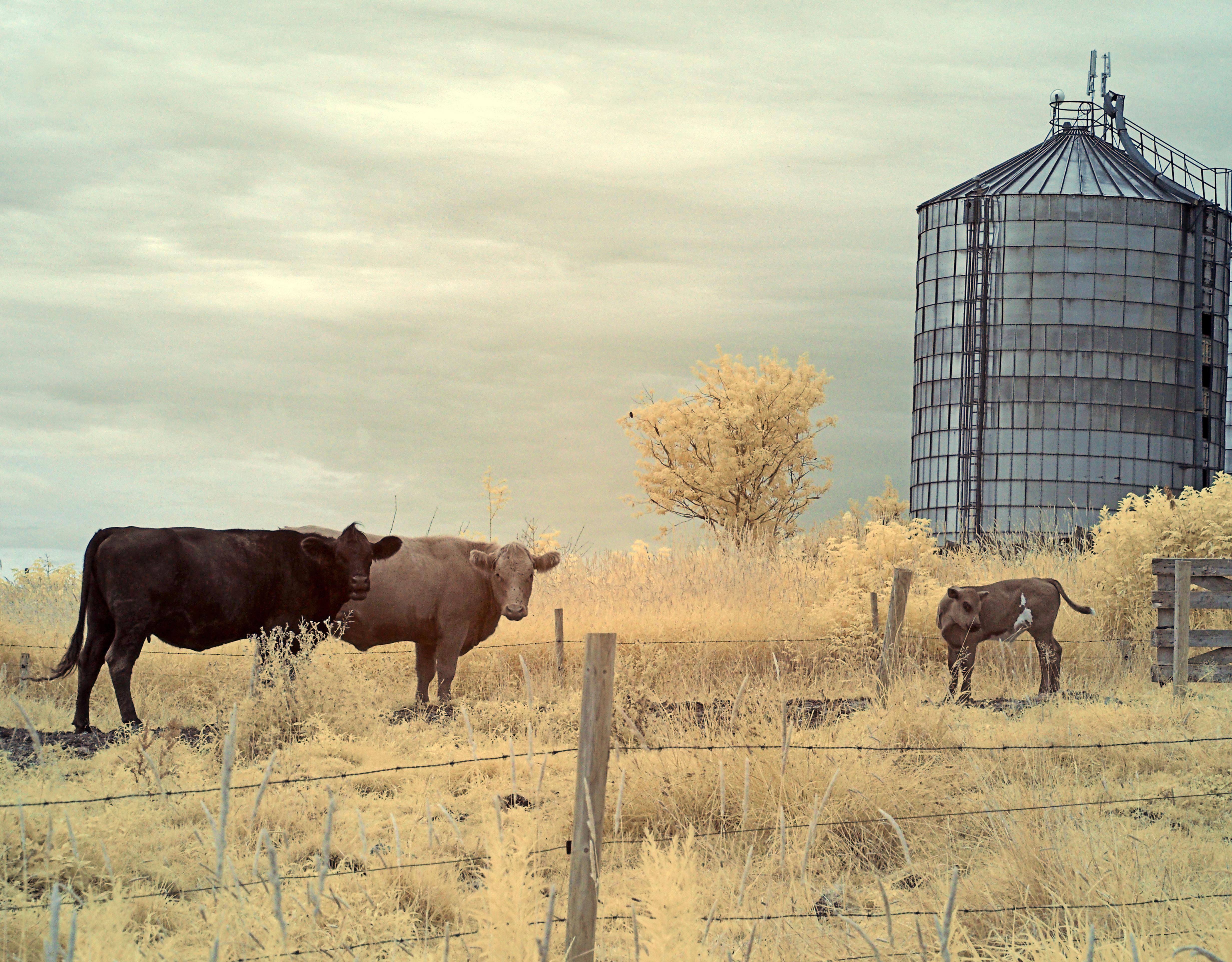 Farm, Clarence NS