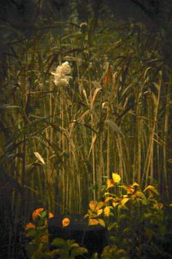Wildflowers, Westhampton.