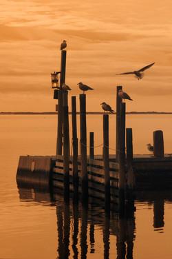 Dock, Eastport NY.